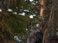 2011-03-01_0792_edytowany-1